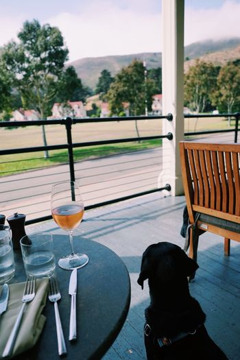 Dog sitting by drink at table in restaurant