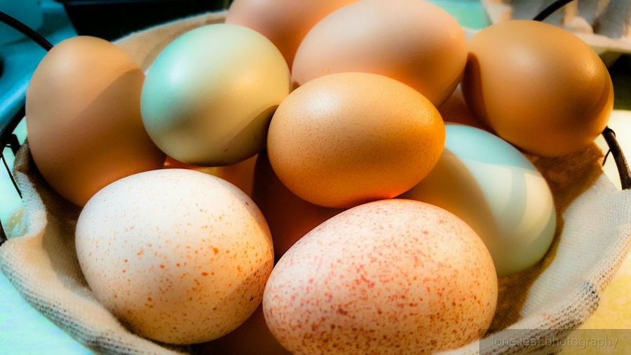 Egg Healthy Eating Food And Drink Food No People Close-up Brown Easter Indoors  Freshness Fragility Day Colored Eggs Protein Chicken Keeping Poultry Eggtopiaeggs Chicken Eggs Poultry Farming Eggsdaily Eggs'n Things Eggs For Breakfast High Quality Protein Fresh Eggs Eggshell