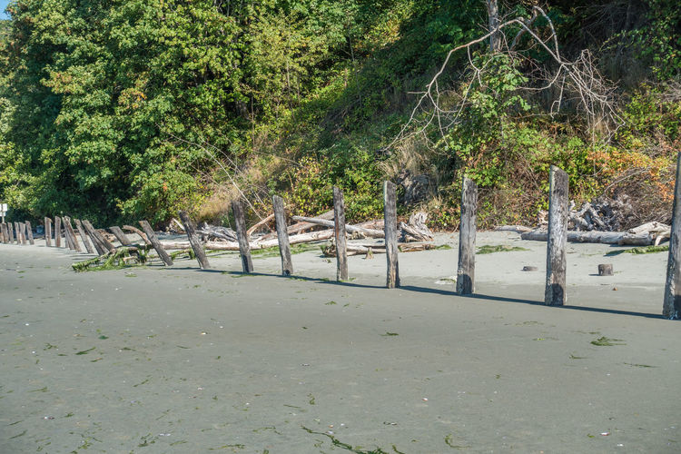 A view of old pilings on the beach at Dash Point, Washington. Barrier Beauty In Nature Boundary Dash Point Day Environment Fence Forest Green Color Growth In A Line Land Landscape Nature No People Non-urban Scene Outdoors Pilings Plant Road Row Tranquil Scene Tranquility Tree