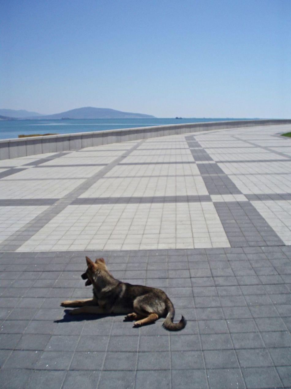 новороссийск набережная бездомный пёс Novorossiysk Quai Sea-front Homeless Dog Chien Errant Capturing Freedom Summer Dogs