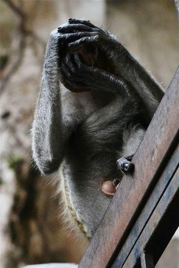Monkey Animals