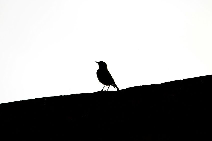 One Animal Animals In The Wild Animal Wildlife Animal Themes No People Beauty In Nature Outdoors Silhouette Day Shadows & Lights Bird Shadow Bird Photography