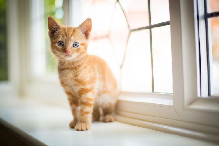 Portrait Of Kitten On Window Sill