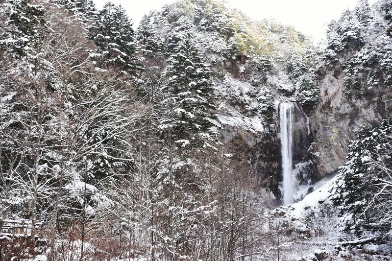 Motion Outdoors Day Spraying No People Long Exposure Tree Nature Snow Frezze  Water Beauty In Nature 瀑布 Japan Japan Photography Travel
