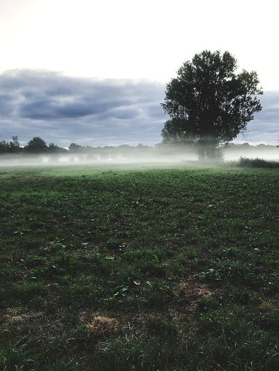 Foggy morning on the fields with a tree in the background Landscape Nature Wandering Walking Silent Alone Mornings Mystic Foggy Fog Nature Sky Grass Tranquility No People Beauty In Nature Tranquil Scene Rural Scene Agriculture Green Color