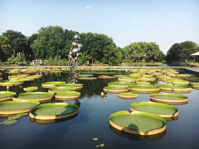 Plant Water Tree Growth Nature Green Color Sky Water Lily