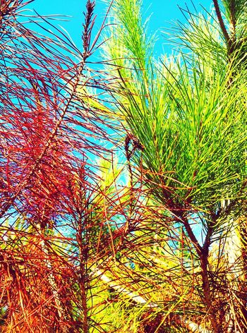 Pins Tree Sky Nature Beauty In Nature Leaves And Sky Leaves 🍁 Leaves🌿 Treescollection Tree_collection  Natural Condition Lightofthesun Lightofmylife Tree_collection  Walking Nature_perfection Green Color Red Color Nature Naturelovers Strange Forms Of Nature