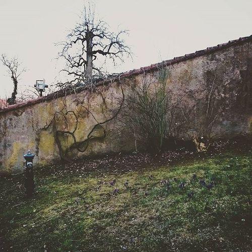 Morbide Schönheit Dinkelsbuhl Fotosvonmanuelkresser Manuel Manuelkresser
