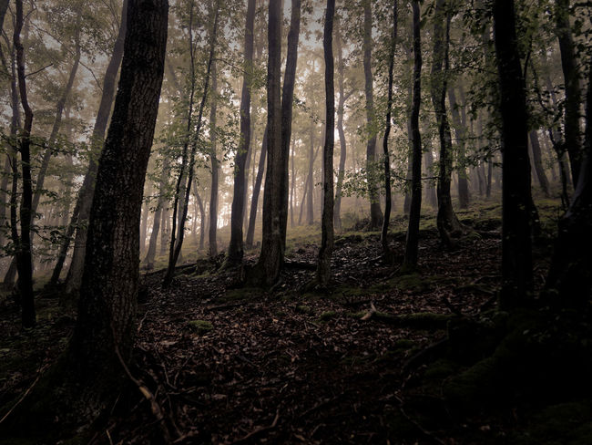 Foggy Weather Beauty In Nature Claudetheen Fog Forest Forest Photography Landscape Mood Moody Weather Nature Tree Tree Trunk Vintage Wilderness Area WoodLand