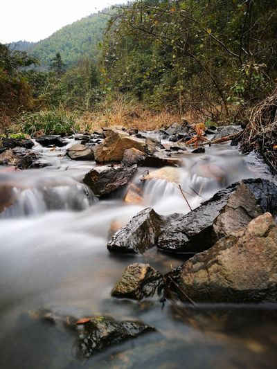 Rocks amidst stream at forest