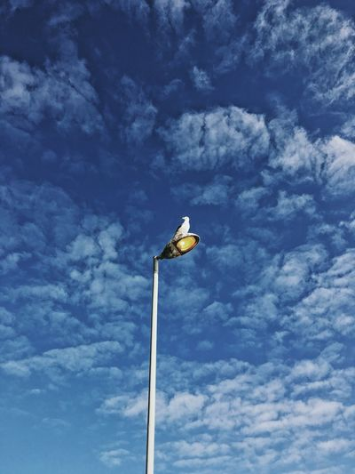 Seagull on lamp, Cape Town. Blue Blue Sky Cloud - Sky Day Lamp Low Angle View Nature No People Outdoors Seagull Sky
