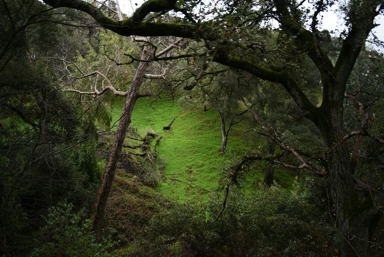 Green Forest Hiking In The Forest Bright Oak Trees Shade Open Grass Shadows Light Shadows & Lights Regnart Road Hiking Photography Early Morning Dusk Morning Morning Walk Nature Nature In Light Clearing