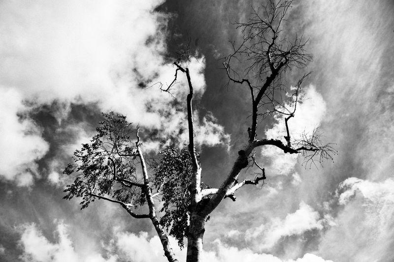 神話 D4s Nikon EyeEm Nature Lover EyeEm Best Shots Cloud - Sky Sky Low Angle View Tree Plant Nature No People Growth Branch Outdoors Beauty In Nature Bare Tree