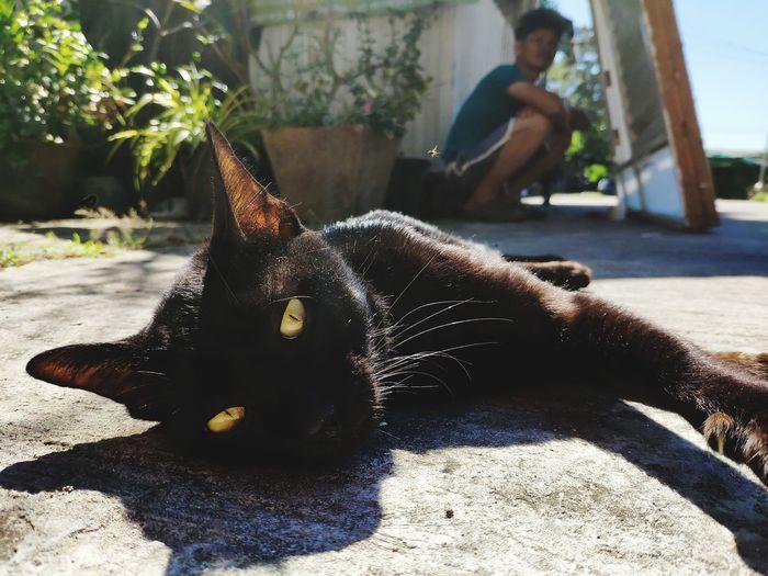 Cat sitting on back yard