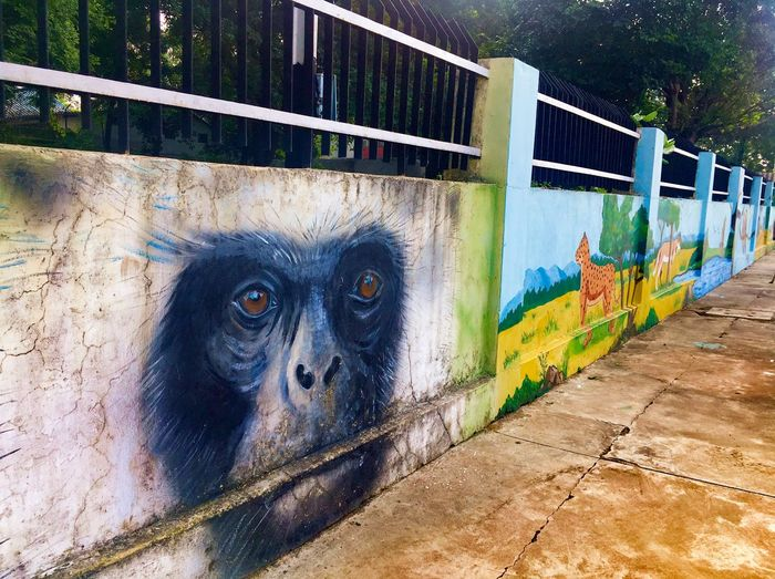 Animal Day Mammal No People Animal Themes Nature Outdoors Graffiti Art And Craft Wall - Building Feature Boundary Primate Barrier Monkey Fence Sunlight Creativity Built Structure Railing