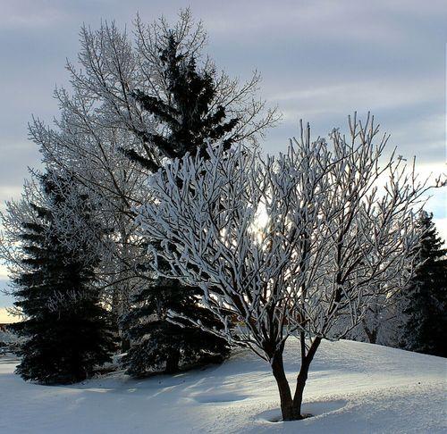 Canadiannature Wintertime Alberta Canada Prairie Nature