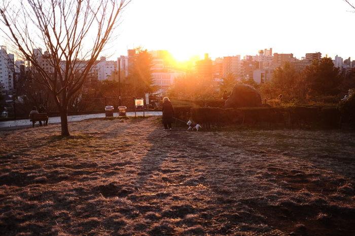 Tramonto al 01.01.2016. New Year Around The World Sunset Sunset Silhouettes Sunset_collection Beautiful Sunset in a Park Tramonto Tramonto Bellissimo al Parco Landscape Landscape_Collection Landscape_photography Tokyo