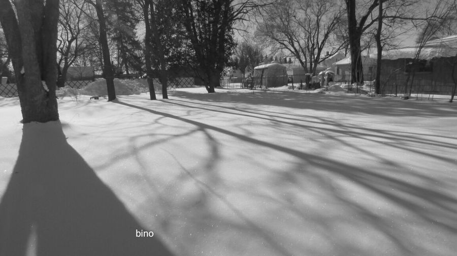 My Street Photography Right Next Door Cold Temperature Winter_collection Sunlight Black And White Photography Cadillac Michigan