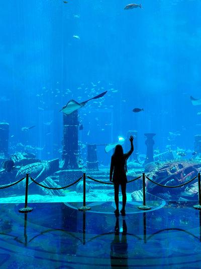 Full length rear view of fish in aquarium