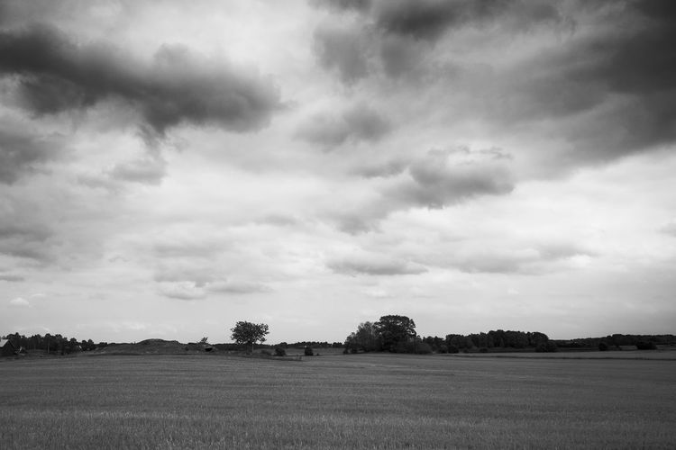 Scenic view of field against cloudy sky Cloud - Sky Sky Landscape Field Environment Tranquil Scene Land Scenics - Nature Beauty In Nature Black And White Monochrome Västra Götaland Tranquility Plant No People Non-urban Scene Nature Tree Rural Scene Day Outdoors Grass Idyllic Agriculture Meadow Growth Cloudscape Weather Season