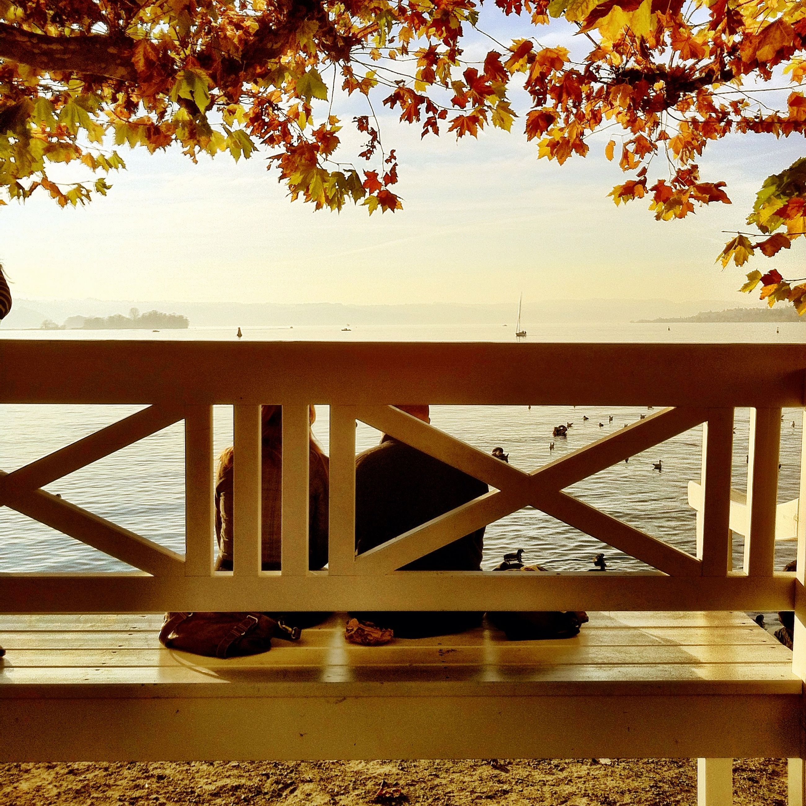 railing, tree, water, wood - material, sea, tranquility, nature, beauty in nature, sunlight, tranquil scene, scenics, pier, branch, wooden, day, bench, outdoors, sky, growth, shadow