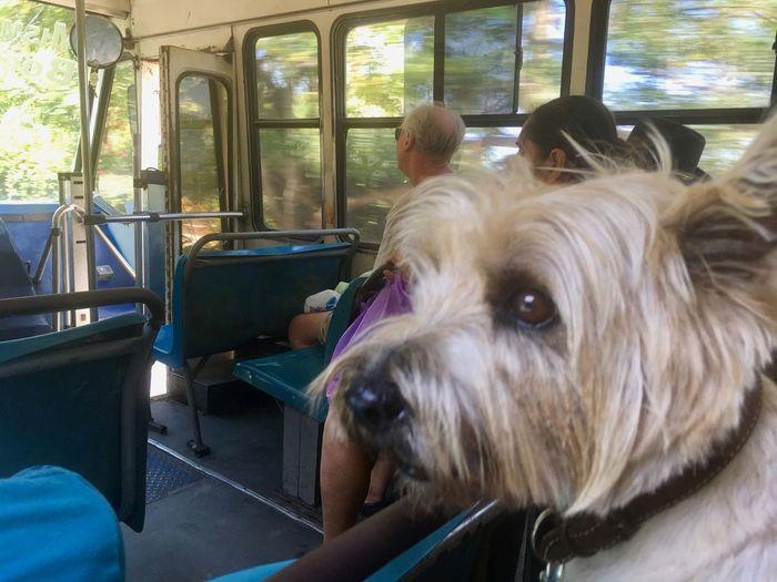 Bus selfie Bus Bus Travel Bus Transportation Bus Transport Cairn Terrier Scottish Terrier Dog Dog Traveller