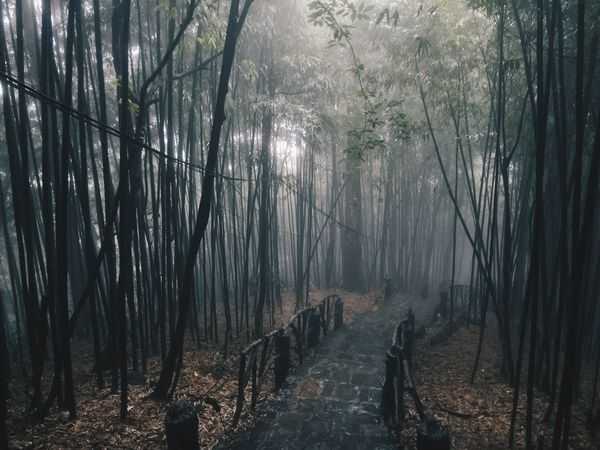 Tam Dao National Park Vietnam