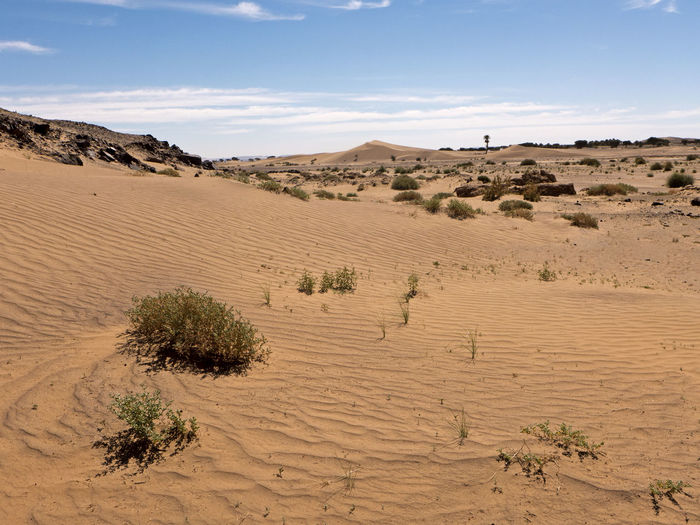 The Sahara desert in the south of Morocco near Tafraout. Land Landscape Climate Scenics - Nature Desert Environment Arid Climate Sky Sand Beauty In Nature Non-urban Scene Nature Tranquil Scene Tranquility Outdoors Morocco Sahara Dry Hot Africa Trekking Hiking Sand Dune Semi-arid No People