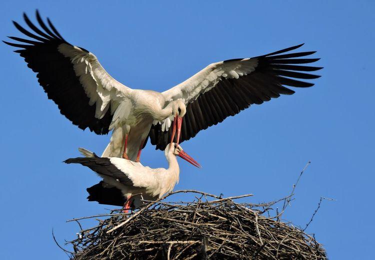 Bird Nest Bird