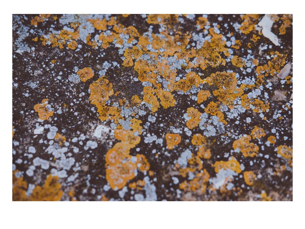 auto post production filter, close-up, no people, day, textured, lichen, nature, outdoors, tree, yellow, snow, beauty in nature