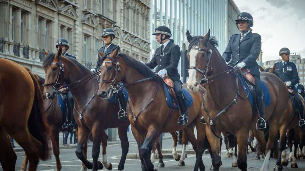 Formal Horses London Officers Outdoors Pageantry Parade Police Street Streetphotography TakeoverContrast The Culture Of The Holidays Uniform United Kingdom Sonyalpha SonyAlpha6000 Dramatic Angles Photography Themes TheCreatorClass Old-fashioned EyeEm Best Shots EyeEm Best Edits Eye4photography  London Lifestyle My Year My View Adapted To The City The Street Photographer - 2017 EyeEm Awards EyeEm LOST IN London Business Stories Mobility In Mega Cities
