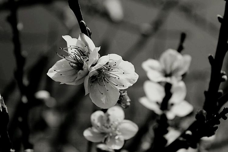 Flower Beauty In Nature Fragility Nature Canary Islands Tenerife. Blackandwhite Photography Blackandwhite