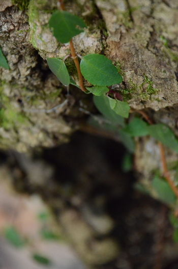 Selective Focus Plant Tree Close-up Growth No People Tree Trunk Trunk Day Nature Green Color Textured  Outdoors Leaf Plant Part Bark Beauty In Nature Land Rough Moss