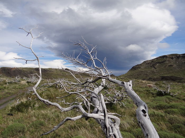 Bare Tree Beauty In Nature Branch Cloud - Sky Day Dead Plant Environment Land Landscape Mountain Nature No People Non-urban Scene Outdoors Patagonia Plant Remote Scenics - Nature Sky Torres Del Paine Tranquil Scene Tranquility Tree