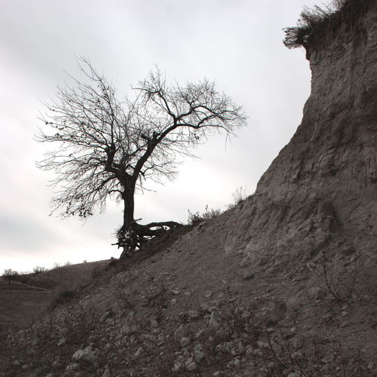 Autumn Bluff Cliff Cloud - Sky Crag Desolation Dull Gray Landscape Nature No People One Outdoors Rock - Object Sky Solitude Tree