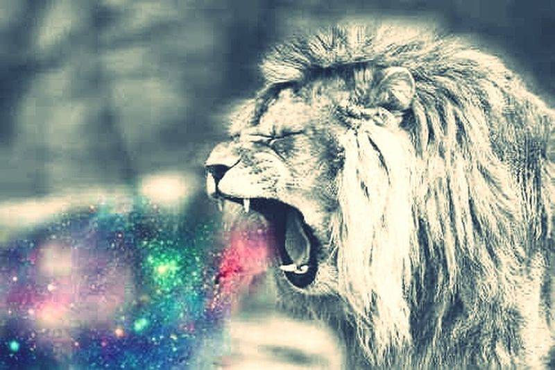 My ' Future Pet Lion Doobie ♡