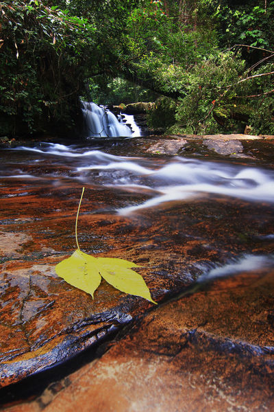 The yellow leaf beside waterfall Waterfall Yellow Leaf Lanscape River Riverscape Tree Green Color Rainforest Forest Stone Rock - Object