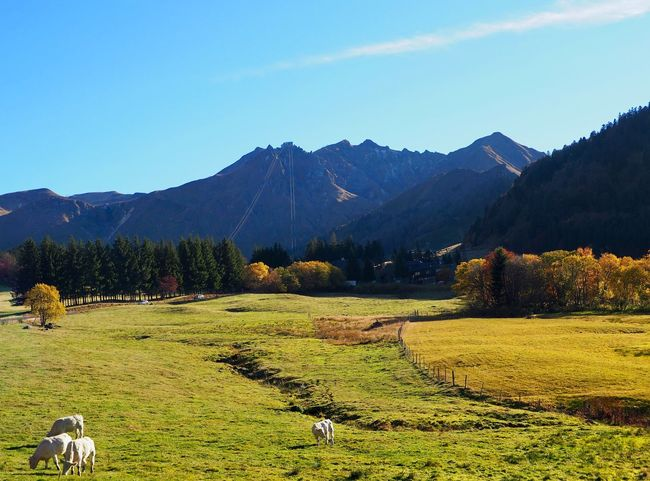Nature Landscape_photography France Volcano EyeEm Nature Lover Cow