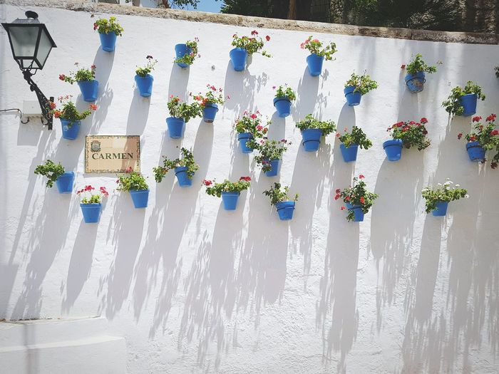 Flower pots on white wall during sunny day