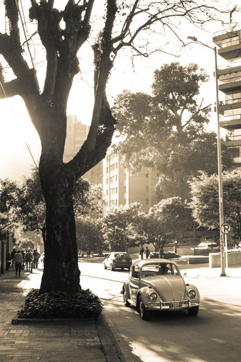INSTAGRAM: @ptafoto16 Chek it out! Architecture Bnw Bnw_captures Bnw_collection Bnw_friday_eyeemchallenge Bnw_life Bnw_society Branch Car City Colombia Day EyeEm Best Shots Growth Land Vehicle Nature No People Outdoors Sepia Sepia Photography Sepia_collection Transportation Tree Tree Trunk