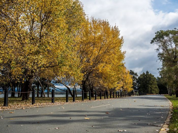 Trees Fall Fall