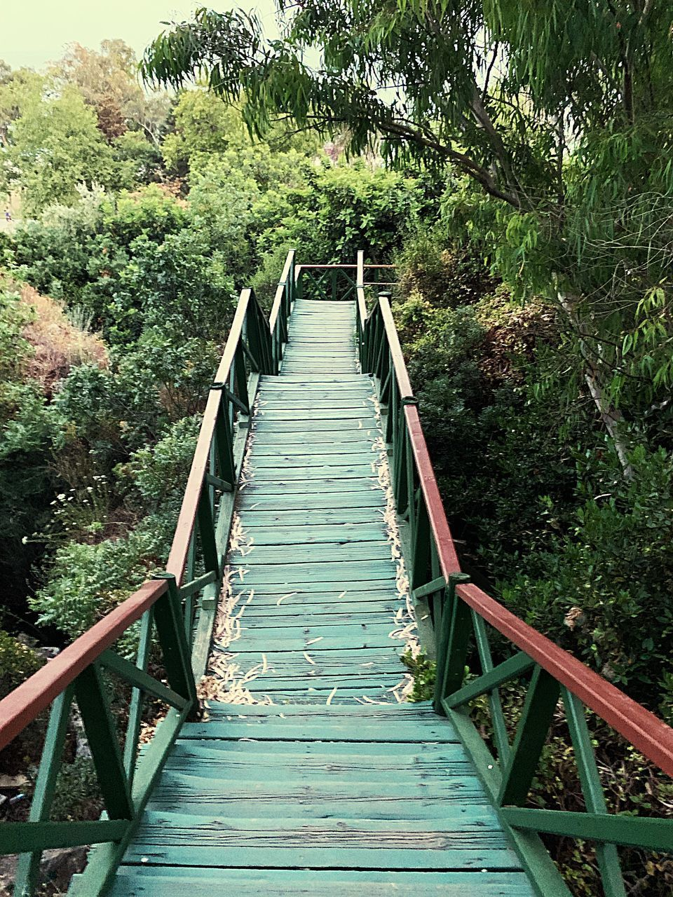 direction, the way forward, plant, tree, railing, bridge, built structure, forest, connection, no people, nature, architecture, growth, day, bridge - man made structure, land, footbridge, staircase, outdoors, green color, steps and staircases, diminishing perspective