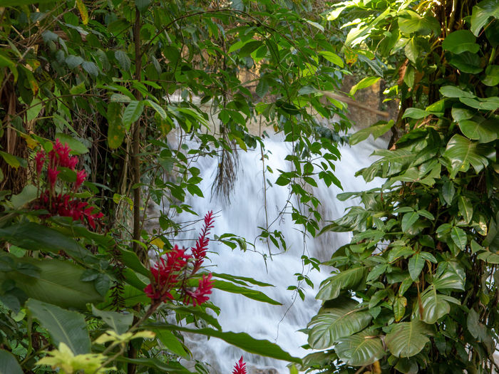 View through trees to Tropical Waterfall Beauty In Nature Nature Outdoors Waterfall Falls Dunns River Falls Dunns Falls Stone Water Falling Water Rocks Tropical Tropical Forest Flowering Plant Red