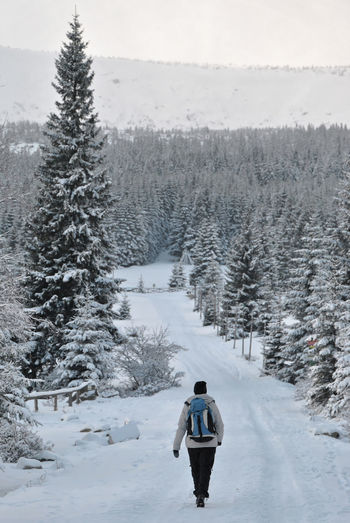 Hiking through winter forest Sightseeing Sudety Traveling Wintertime Woman Beauty In Nature Cold Temperature Day Hiking Adventures Hiking Trail Nature One Person Outdoors Real Woman Rear View Scenics Snow Snow Covered Trees Snow Landscape  Tranquility Tree Weather Wife Winter Winter Forest