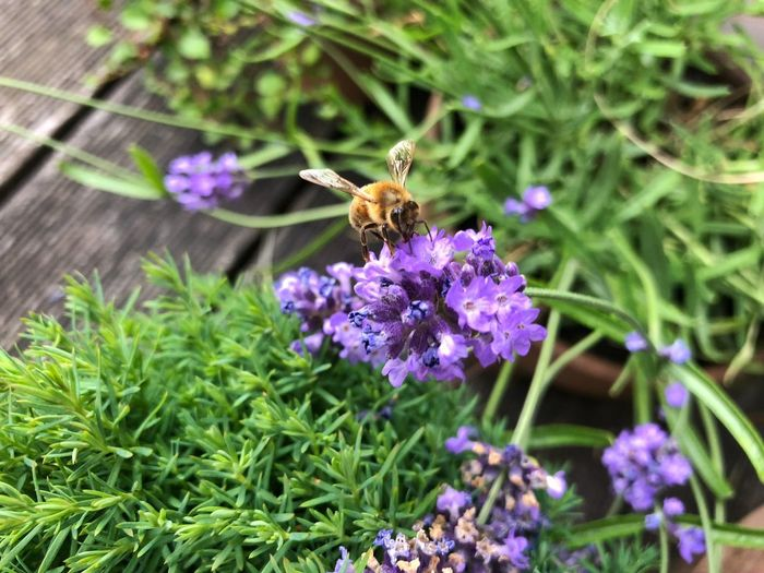 Bee sitting on