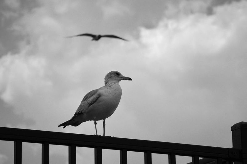 Low angle view of seagulls perching on railing