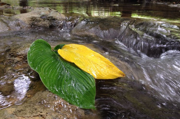 Beauty In Nature Close-up Day Freshness Leaf Motion Nature Outdoors Splashing Water Waterfall Wet