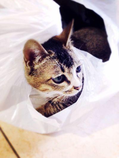 小猫咪的忧郁… First Eyeem Photo