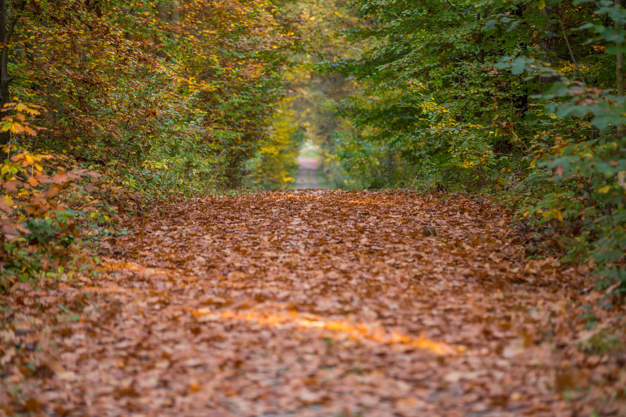 plant, tree, autumn, road, nature, plant part, leaf, forest, dirt road, land, direction, day, the way forward, landscape, dirt, footpath, transportation, no people, outdoors, environment, change, woodland, surface level
