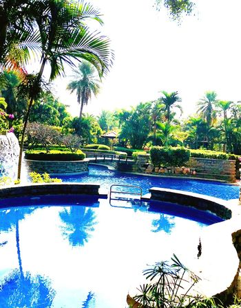 Palm Tree Tree Water Reflection Nature Tranquil Scene Tranquility Swimming Pool Beauty In Nature
